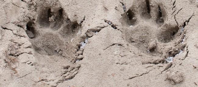Sands of Enns