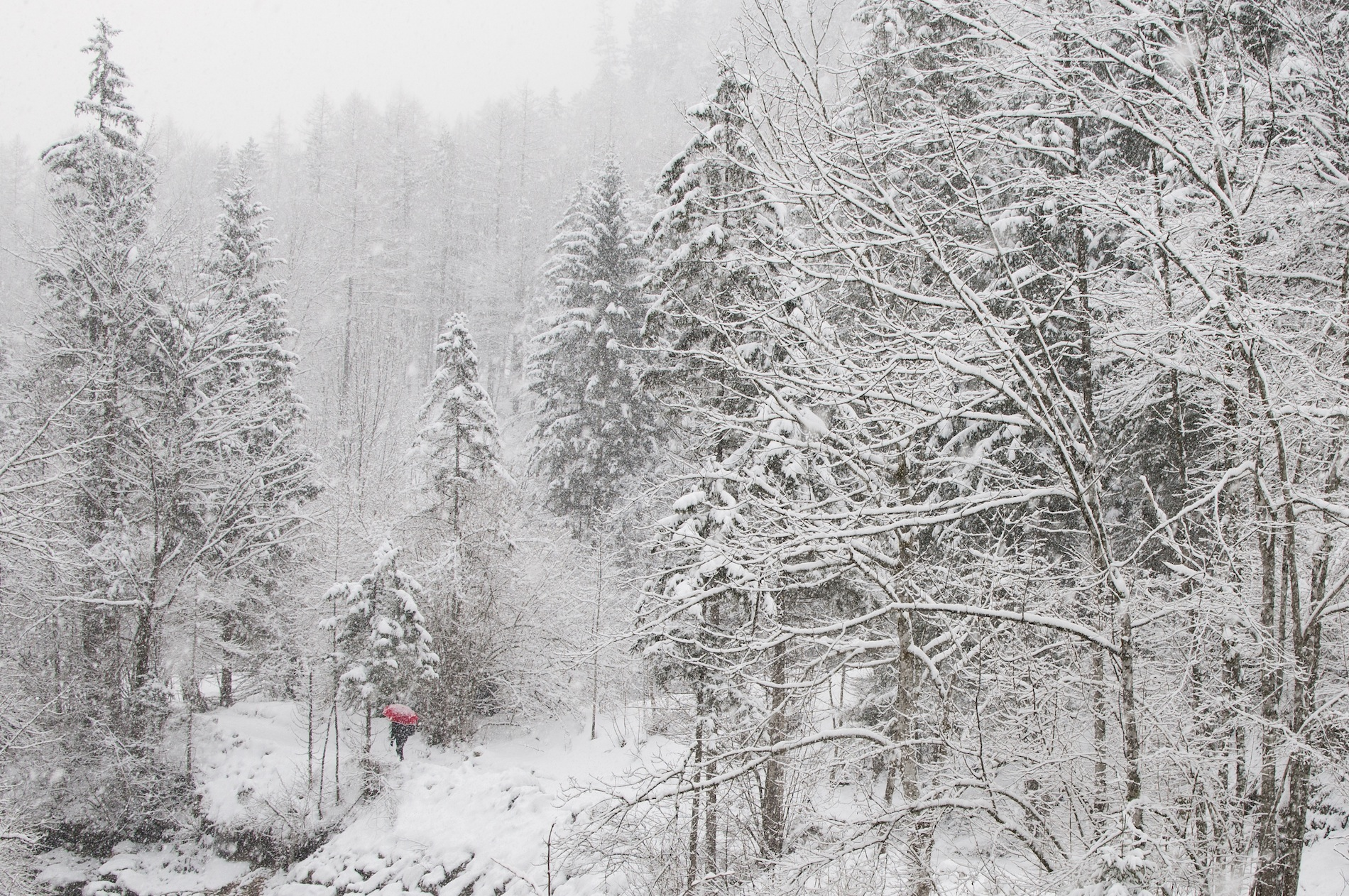 Winterfotografie mit Thomas Hackl